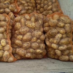 Продается семенной картофель
