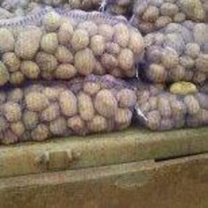 Продается картофель продовольственный