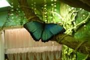 Высоко прпбыльный бизнес ферма Живых Тропических Бабочек  из Чили