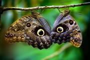 Высоко доходный  бизнес ферма Живых Экзотических Бабочек  из Амазонки